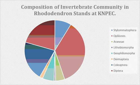 Invertebrate orders trapped in rhododendron infestations (part of BSc final year project)